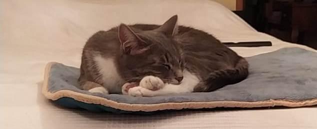 кошка Пуся спит на кровати